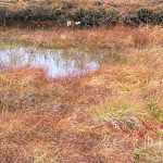 The bog in December